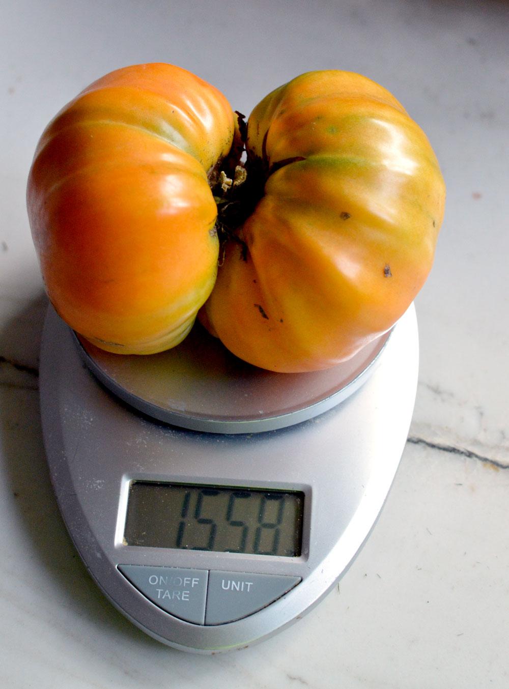 1.5 pound kellogs breakfast tomato