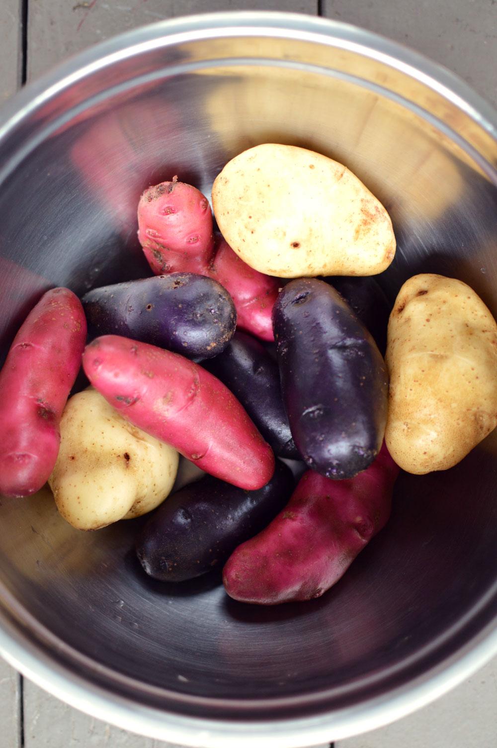 Colored-Potatoes.jpg
