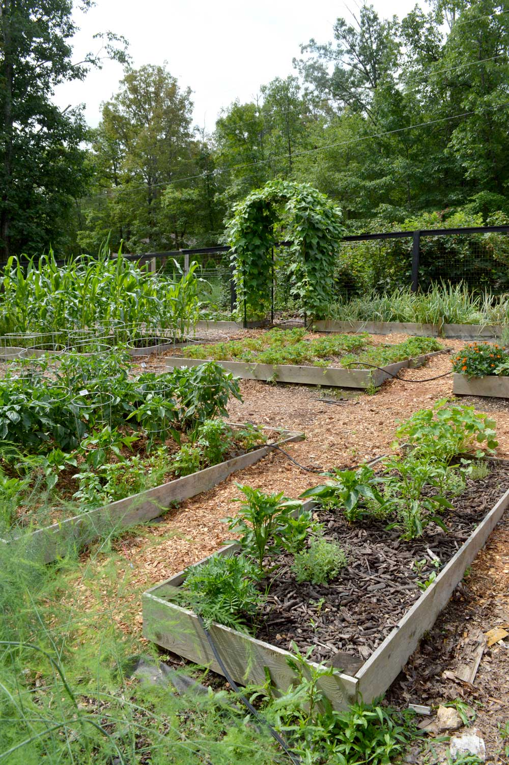 My garden is on a steeper slope, so we put in Terraced Raised Beds.