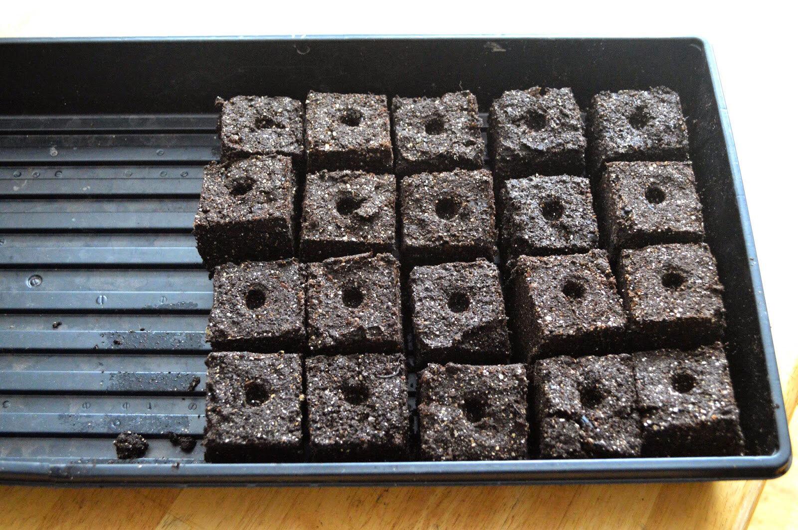 Soil-Blocks-no-Plants.jpg