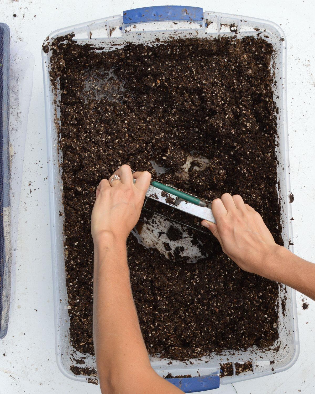 Soil-Blocking.jpg