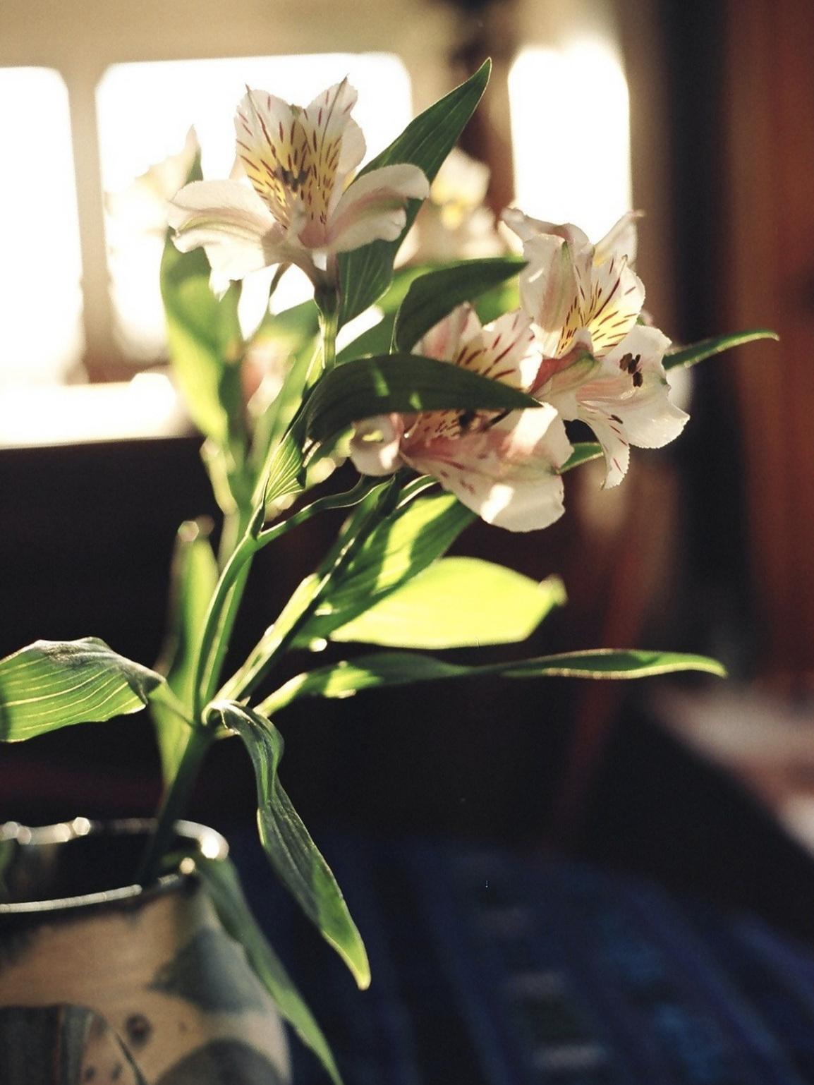 Indoor-flowers-copy.jpg