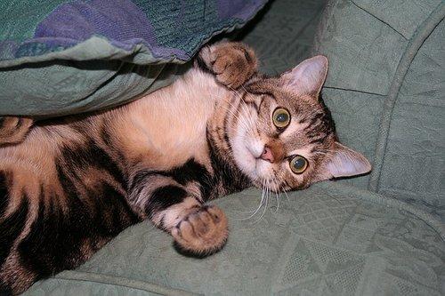 cat-1207462_640.jpg