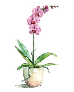 Acrylic   Orchid