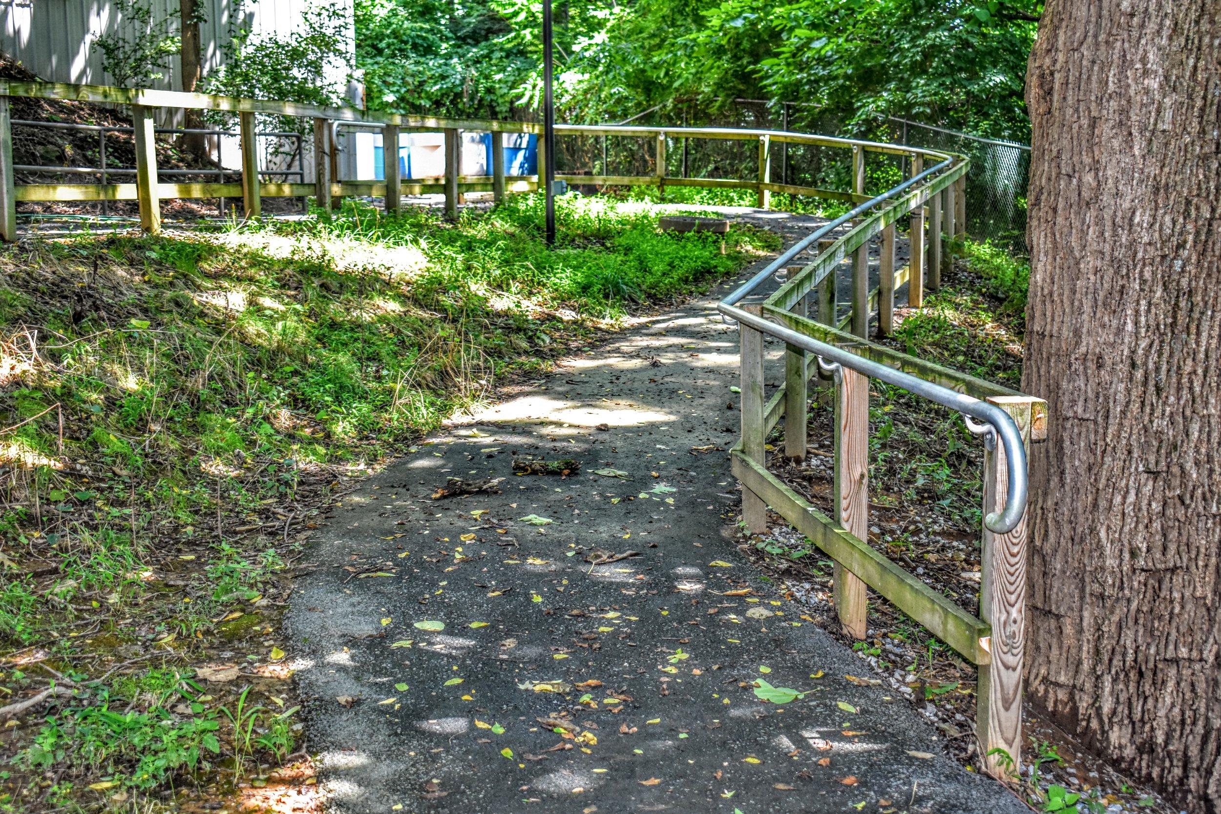 Amp Path.jpg