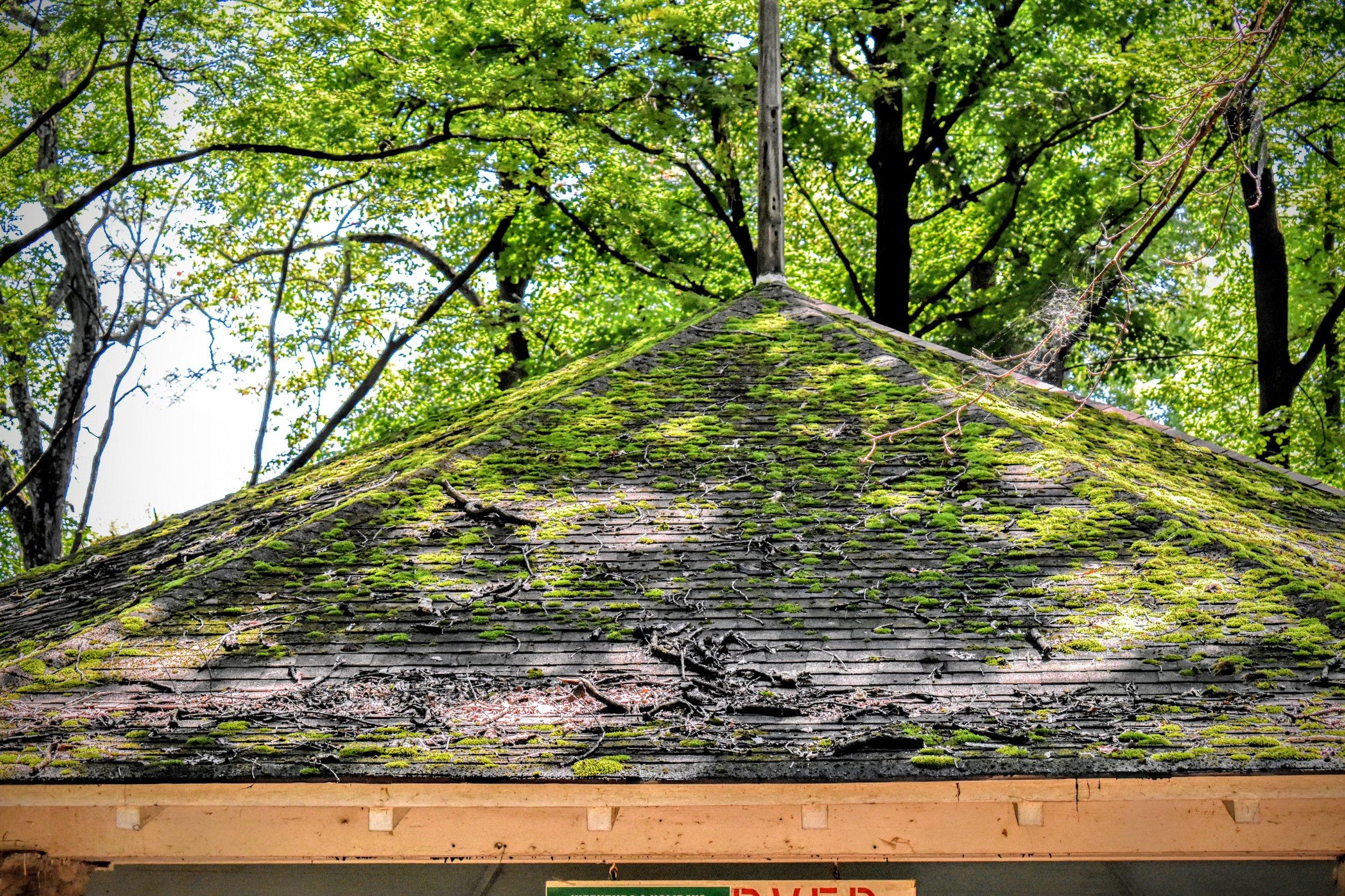 Shell Roof.jpg