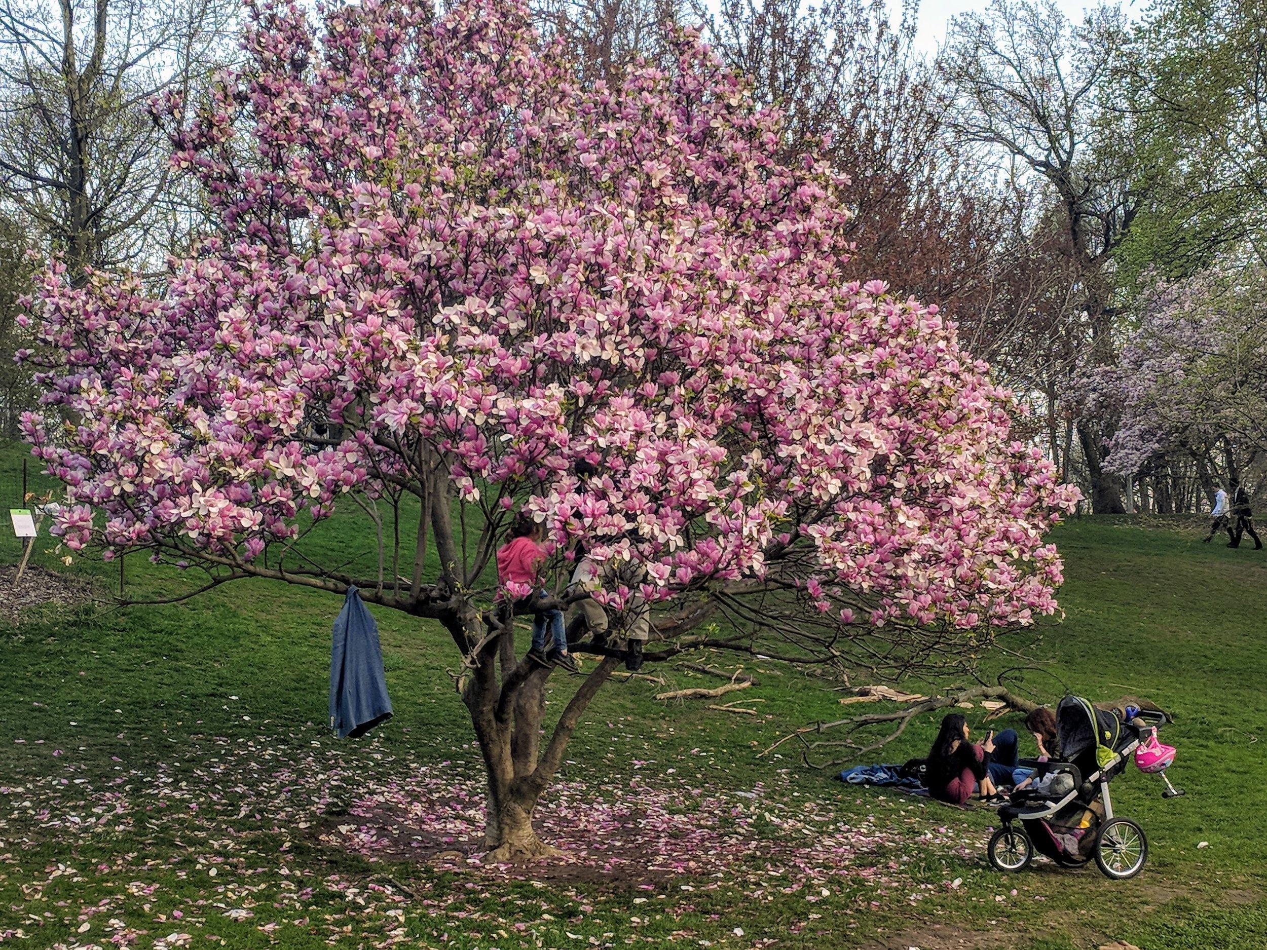 Prospect Park - New York City, New York