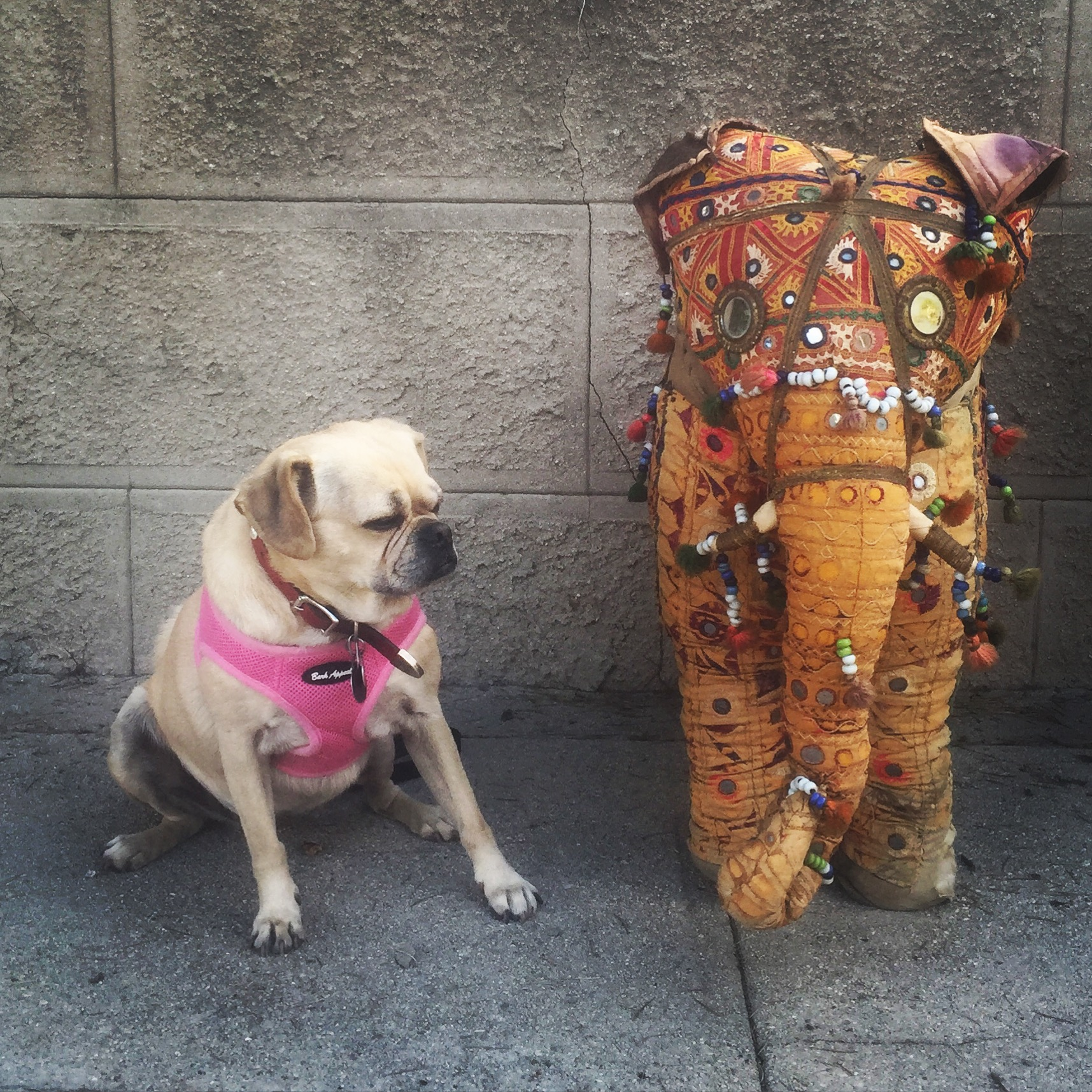 Elephant Puggle (LA 2015)
