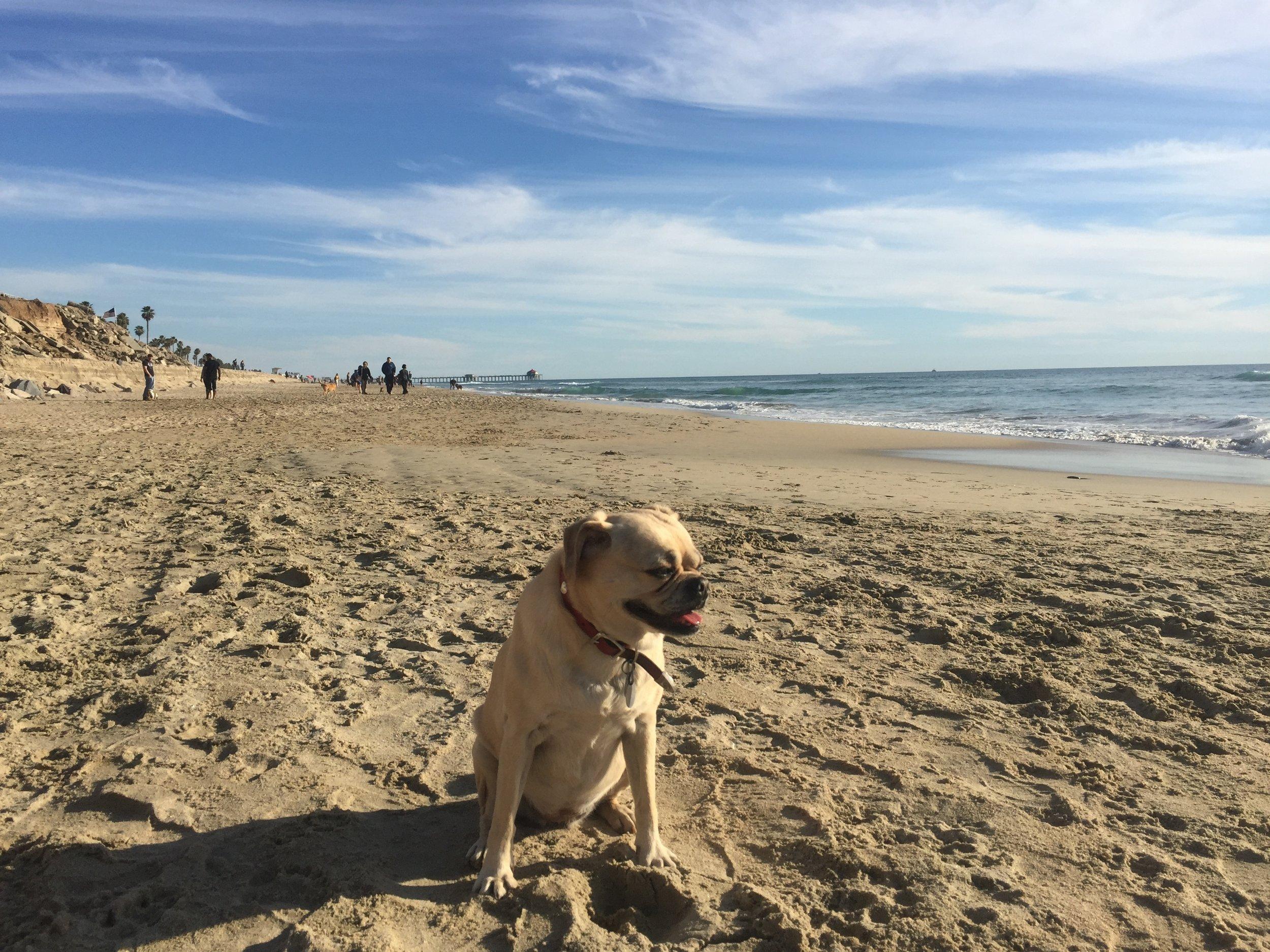 New Year Beach Day 2016