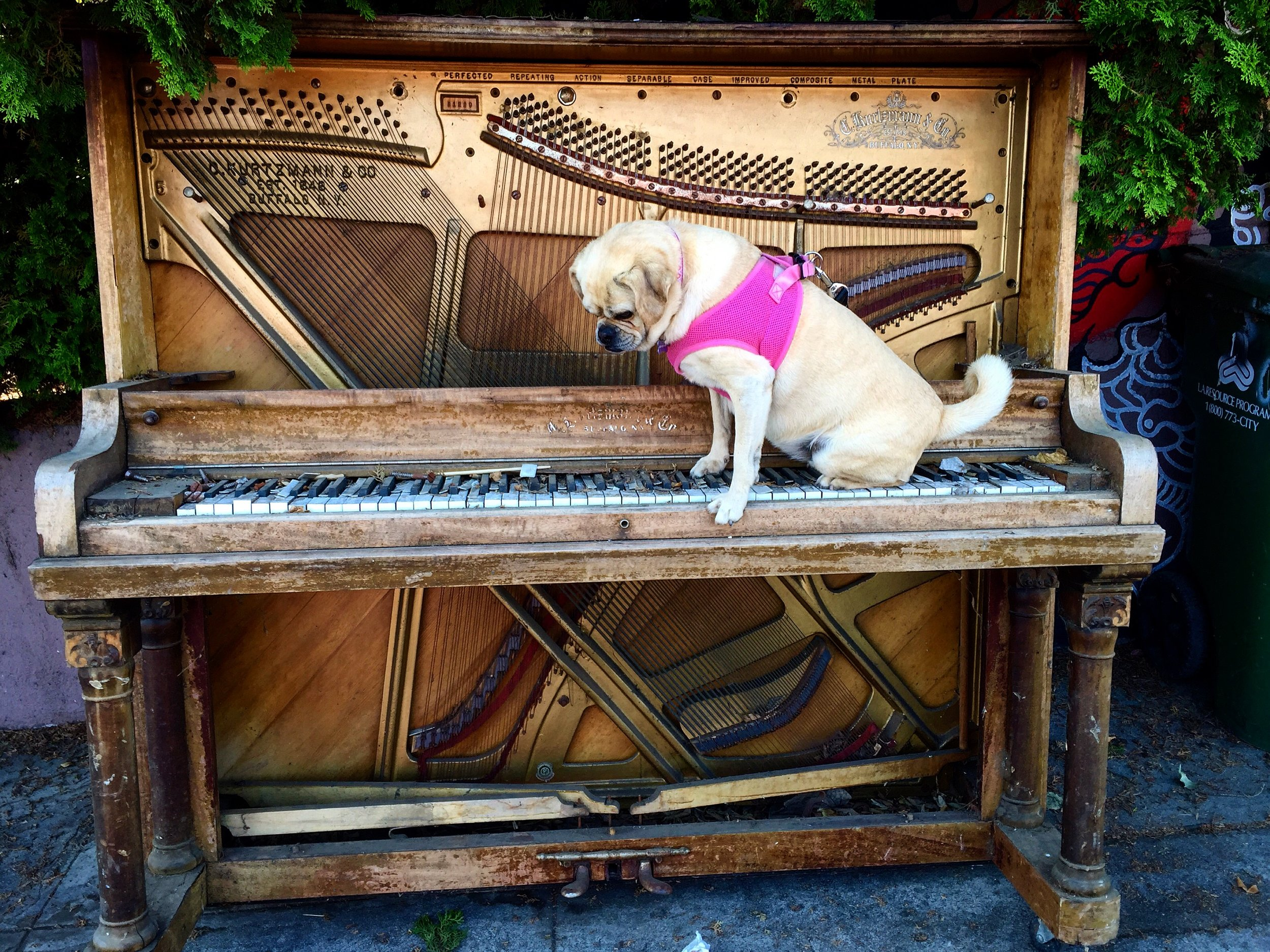 Piano Puggle (LA 2016)