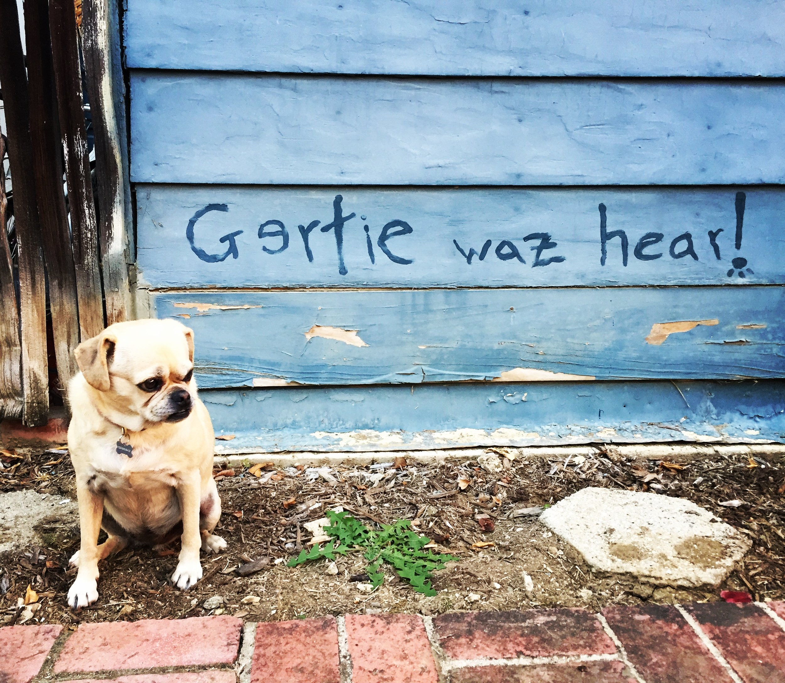 Came home to discover this graffiti on the side of the garage ... Gertie SWEARS she didn't do it ... but I don't know ... I mean, the spelling... the guilty look ... (LA 2016)