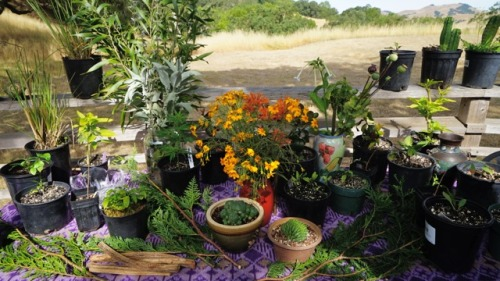 Jane Straight's Visionary Plant Altar at the 2015 Women's Visionary Congress