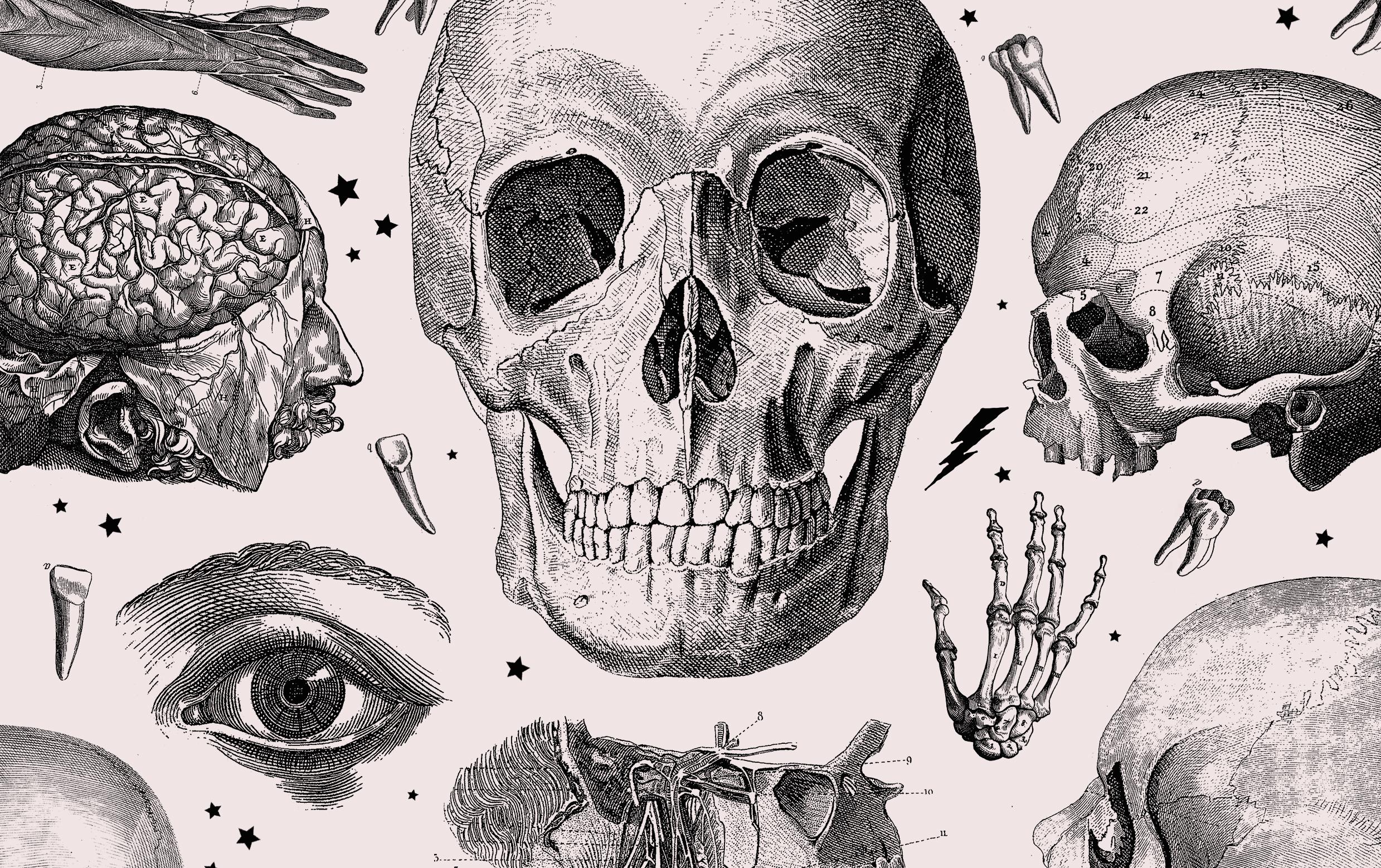 Skulls & Anatomy - Copyright Free Vintage Illustrations For Artists & Designers