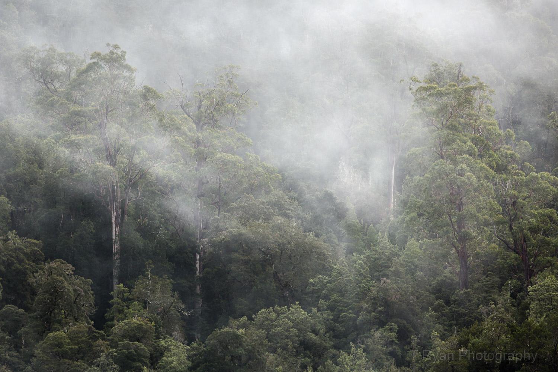 West_Coast_Tasmania29.jpg