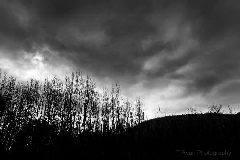 West_Coast_Tasmania37.jpg