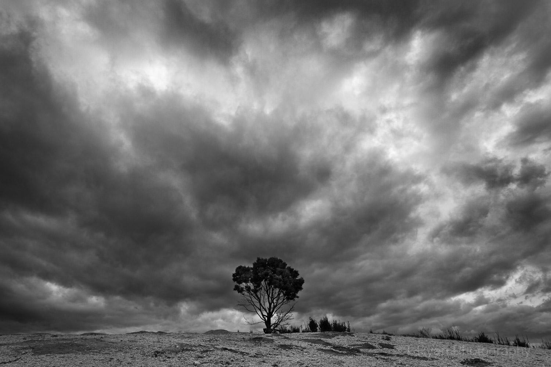 West_Coast_Tasmania39.jpg