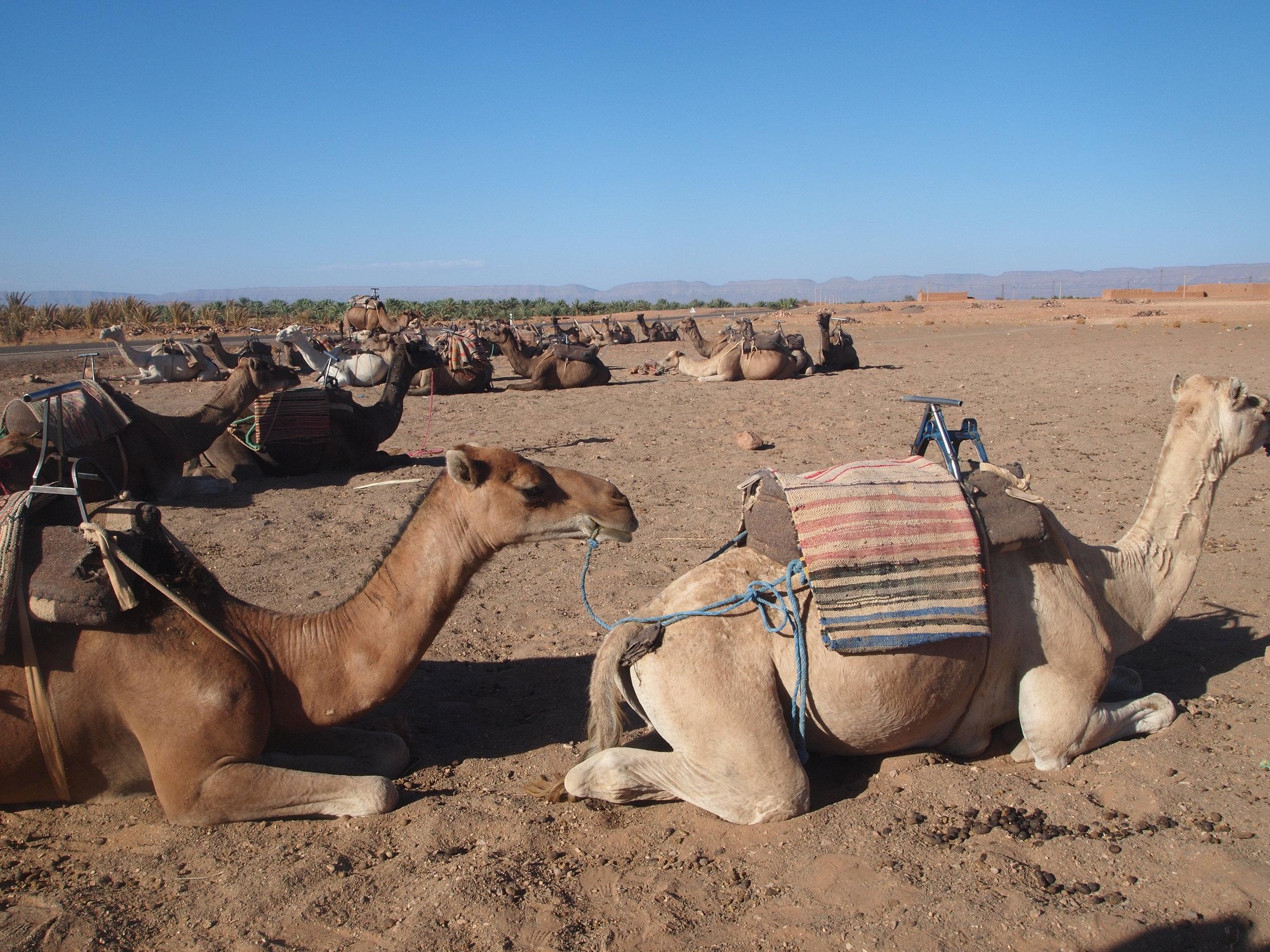 City: Zagora Desert  The Journey -Camel Ride to Camp site
