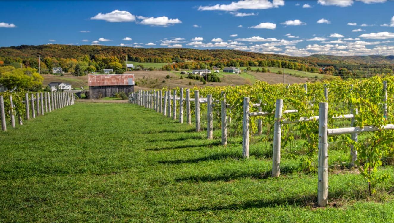 Photo credit Petoskey Farms Vineyard & Winery