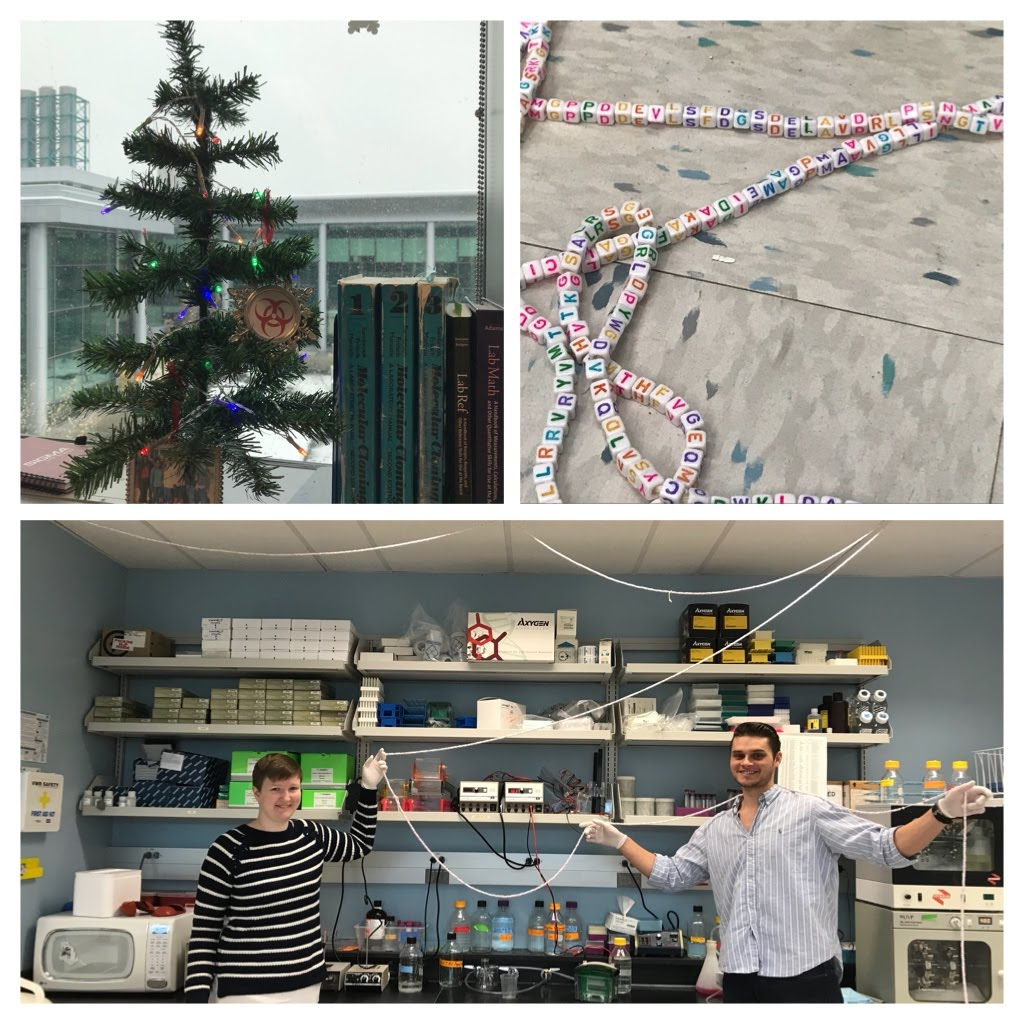 Zika virus polyprotein makes an excellent holiday tree garland, December 2017.