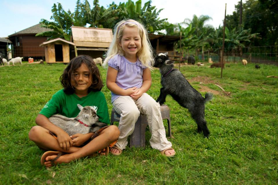 KAEC_kauai_animal_education_center_rescue_shelter_nonprofit_farm_cause_community_youth.jpg
