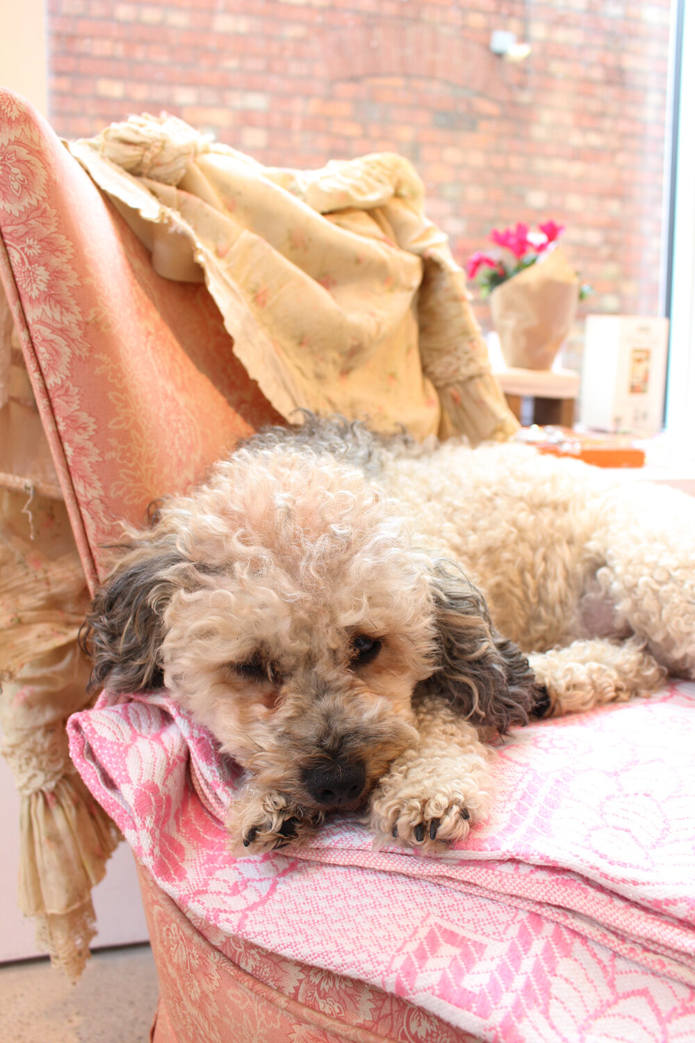Milligans adorable dog on the chair.JPG