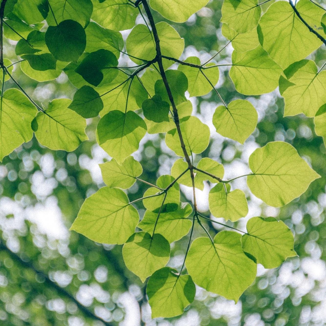 branch-bright-ecology-1143002.jpg