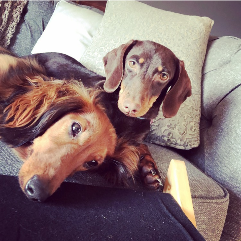 Oswald & betty - Are our resident sausages absolutely love having friends over. Your Dachshund will have the best time socialising with all our guests.