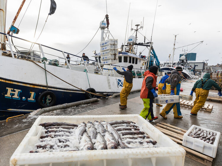 The Landing Obligation makes it a legal requirement to land all catches. Image supplied by Seafish: www.seafish.org.