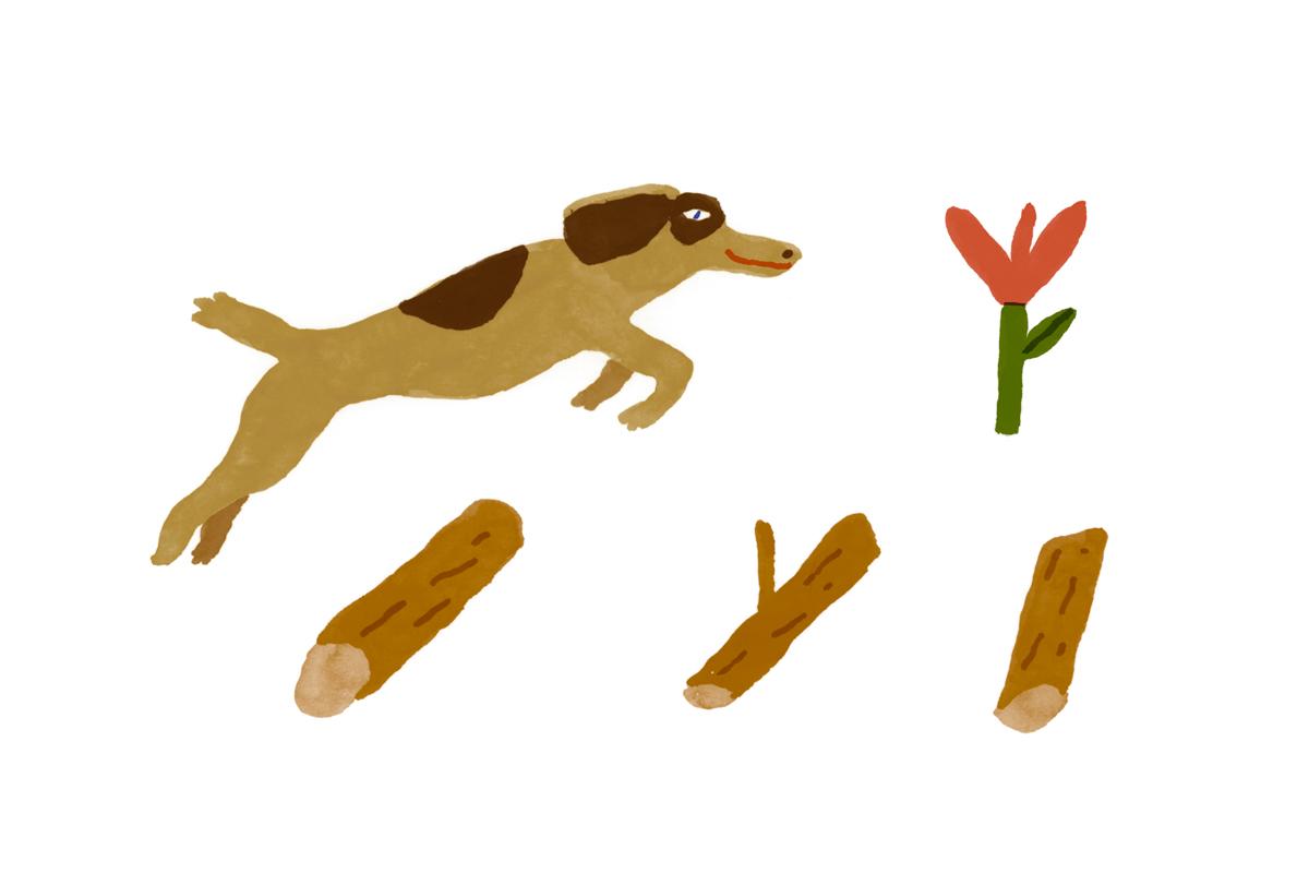 springdogwebsite.jpg