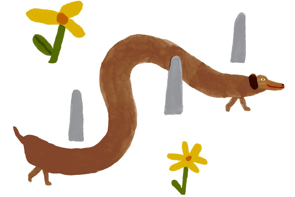 springdog2aawebsite.jpg