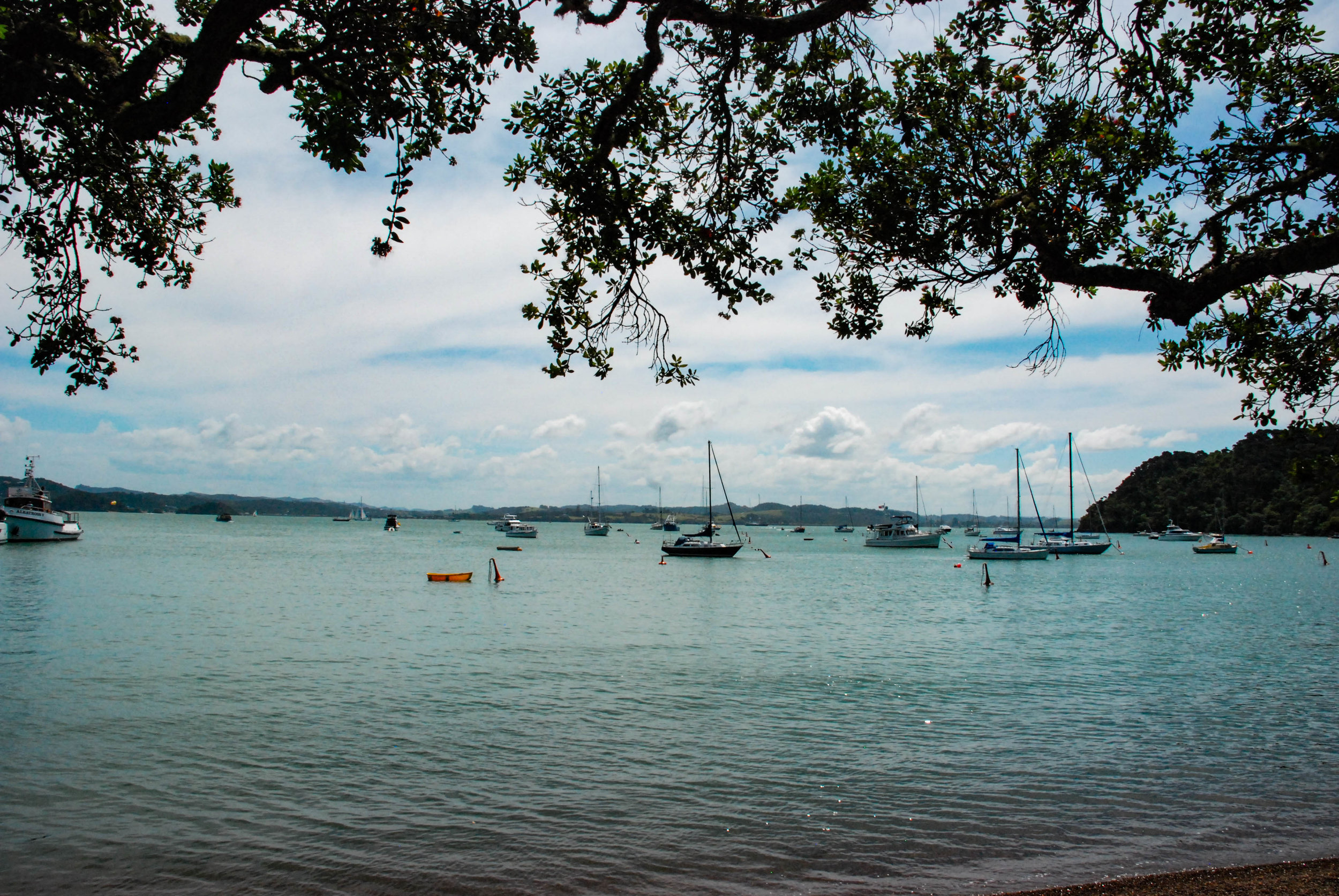 Bay of Islands 5.jpg