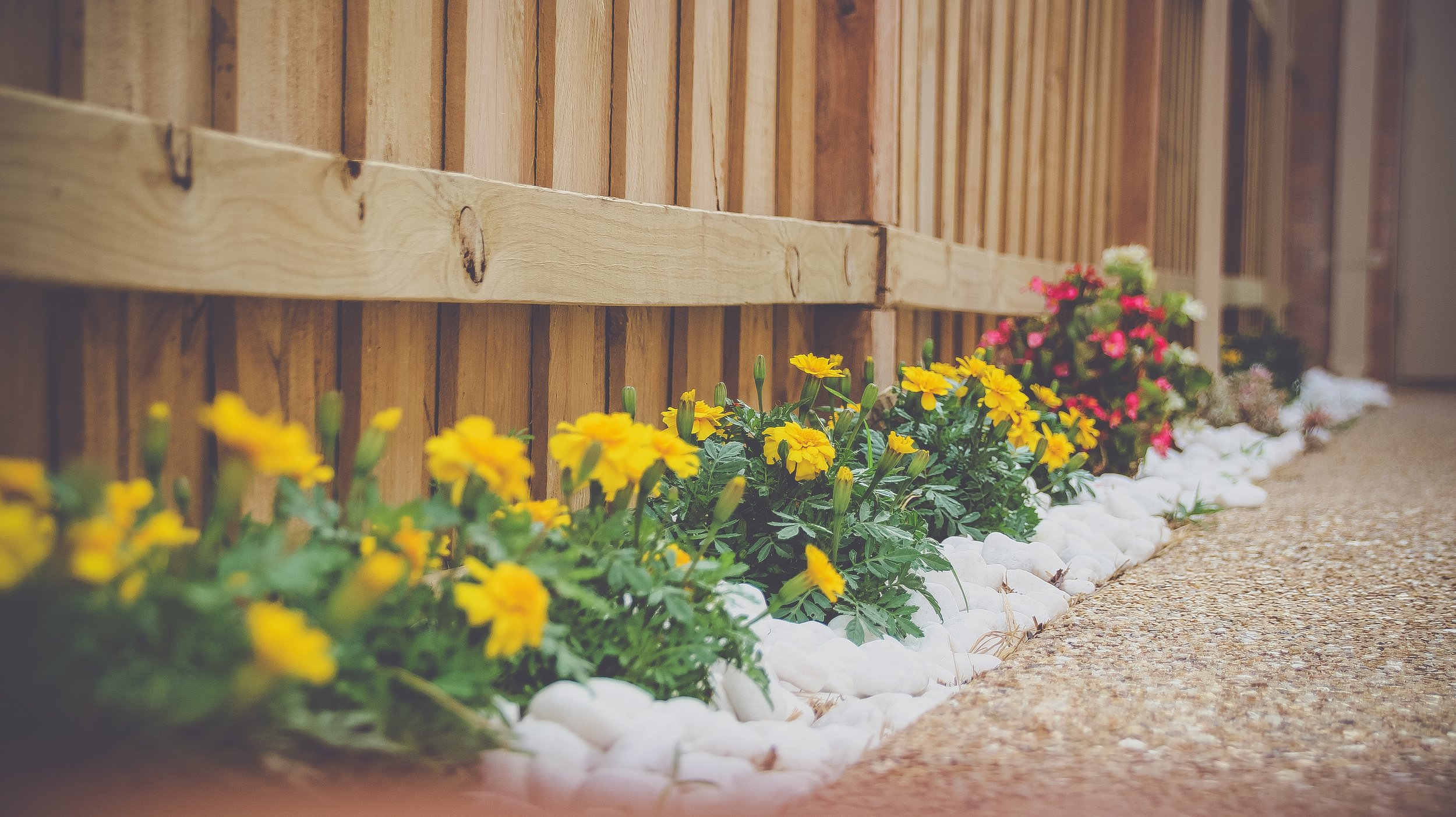This is a perfect time to decide on the types of vegetable and/or herbs you want to grow this season. Remember you can plant these with your flowers and shrubs; you do not necessarily need a dedicated space.