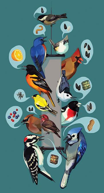 Backyard Birds.png