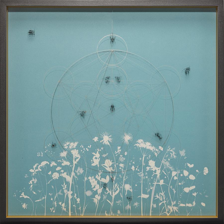 The-Blue-Meadows-of-Eve-1.jpg