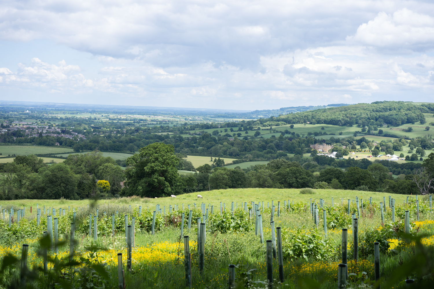 SAWDAY'S - COTSWOLDS-01011.jpg