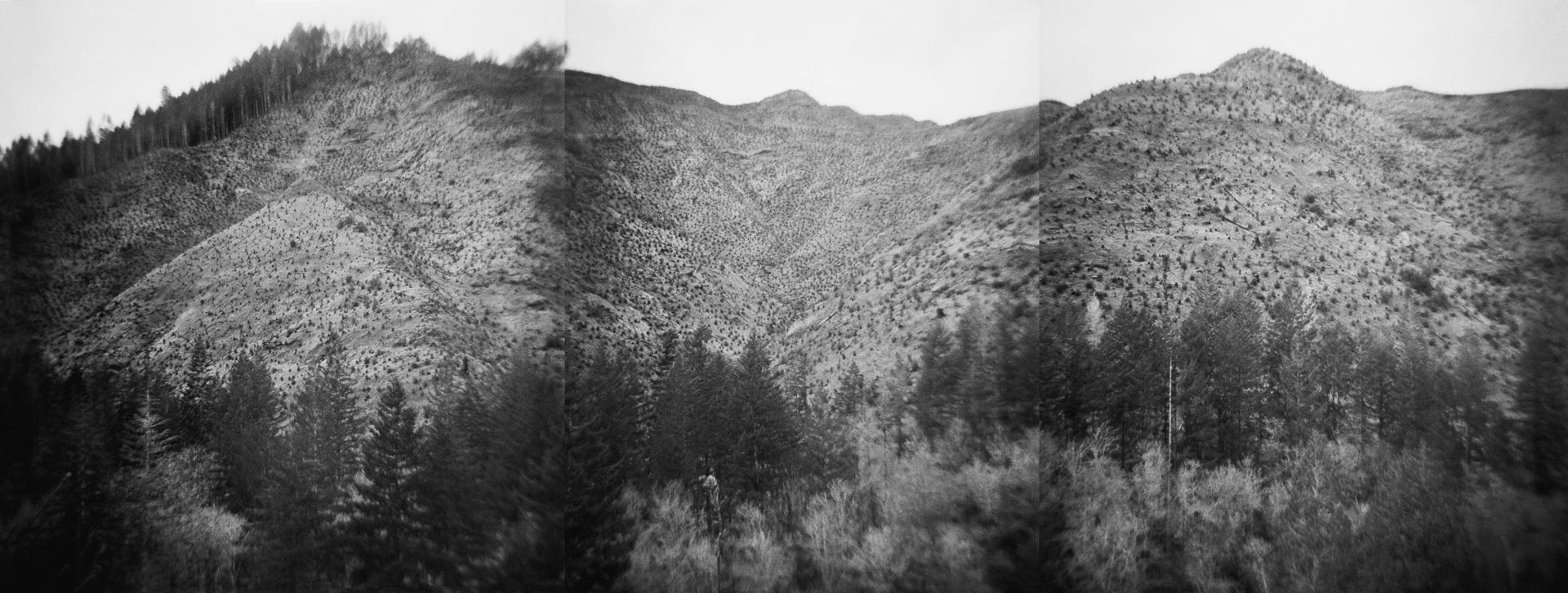 Untitled (clear cut triptych), 2018