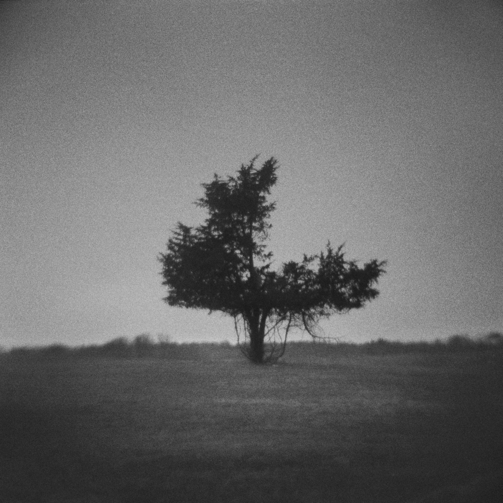 Untitled (3/4 tree), 2013