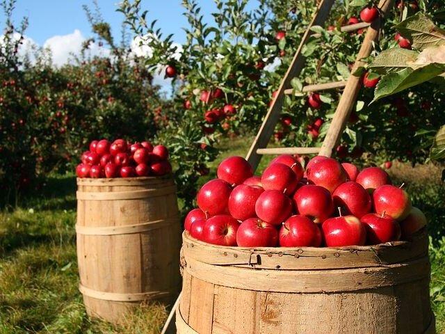 orchard-1872997__480.jpg