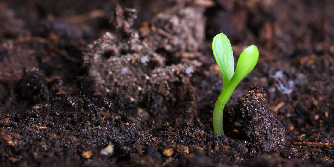 soil-sprout-1.jpg