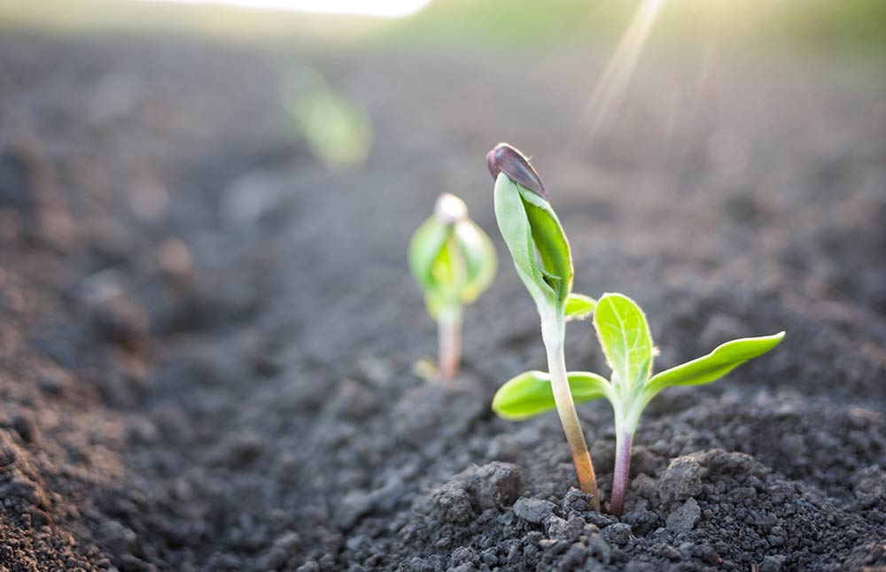 soil-sprout.jpg
