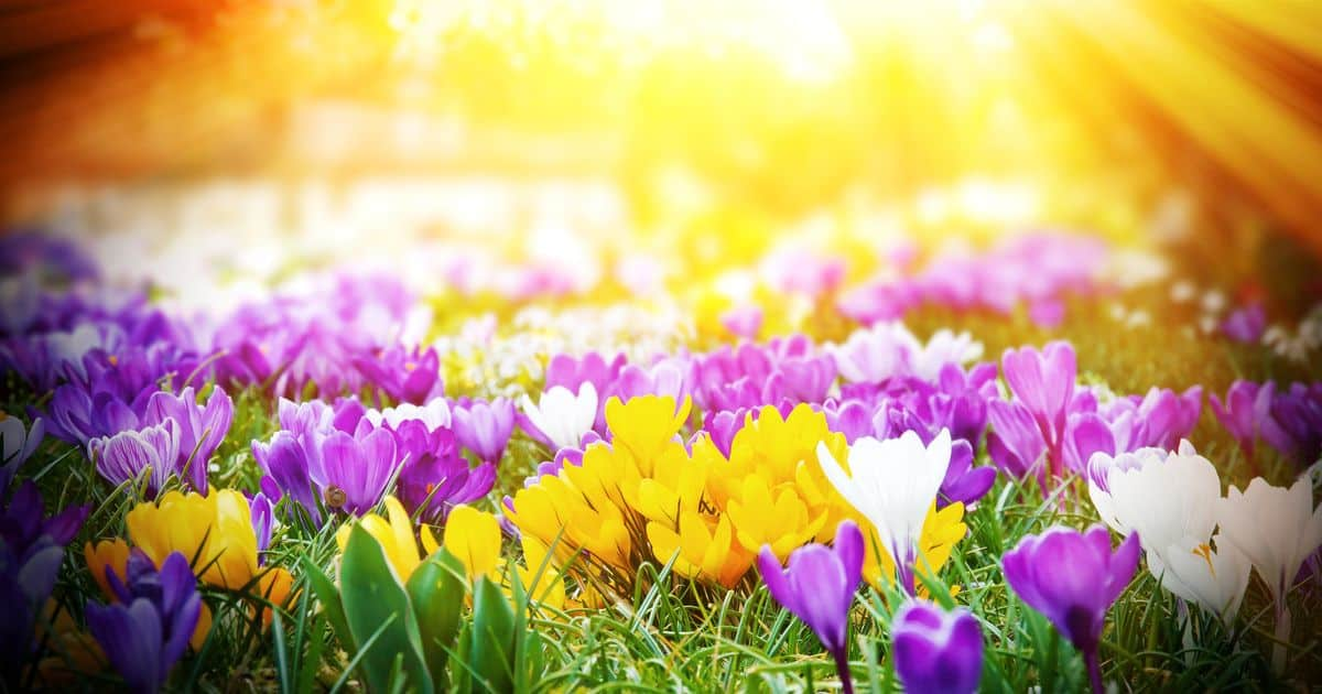 APRIL HEALTH TIP - ALLERGIES - By Alonda Crockett RN, FNP-C and the staff at Farmers Branch Primary Care LLC | April 1, 2019Spring is here, flowers are blooming, and pollen is in the air. This is the time of year that many people suffer from allergies. Allergies are defined as a reaction from the immune system due to repeated exposure to pollen, grass, weed, mold, pet dander, shellfish, nuts, dairy products, fragrance/perfumes, etc. A simple change in atmospheric pressure can cause a flare up with your allergies. Once exposed, the immune system releases histamine, which in return causes irritation and inflammation to the airway, eyes, ears, and/or skin. Common symptoms are itchy/watery eyes, hives, sneezing, runny nose, fatigue, rash, etc. Common at-home treatments for allergies can be Sinus Rinses, Zyrtec, Xyzal, Claritin, Flonase, limited time outside or around irritant, allergy eye drops, etc. If you suffer from allergies and have tried these common at-home treatments, we would love to help you get control of your allergies along with other healthcare issues that you may have.Please do not hesitate to call our office for an appointment (972-784-0961) or walk in to have your healthcare needs taken care of. We hope to see you soon…