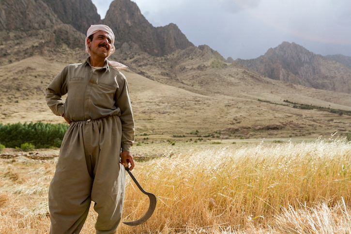 Kurdish farmer with contaminated wheat, from The Iraqi Seed Project. © Anna Laurent, all rights reserved.