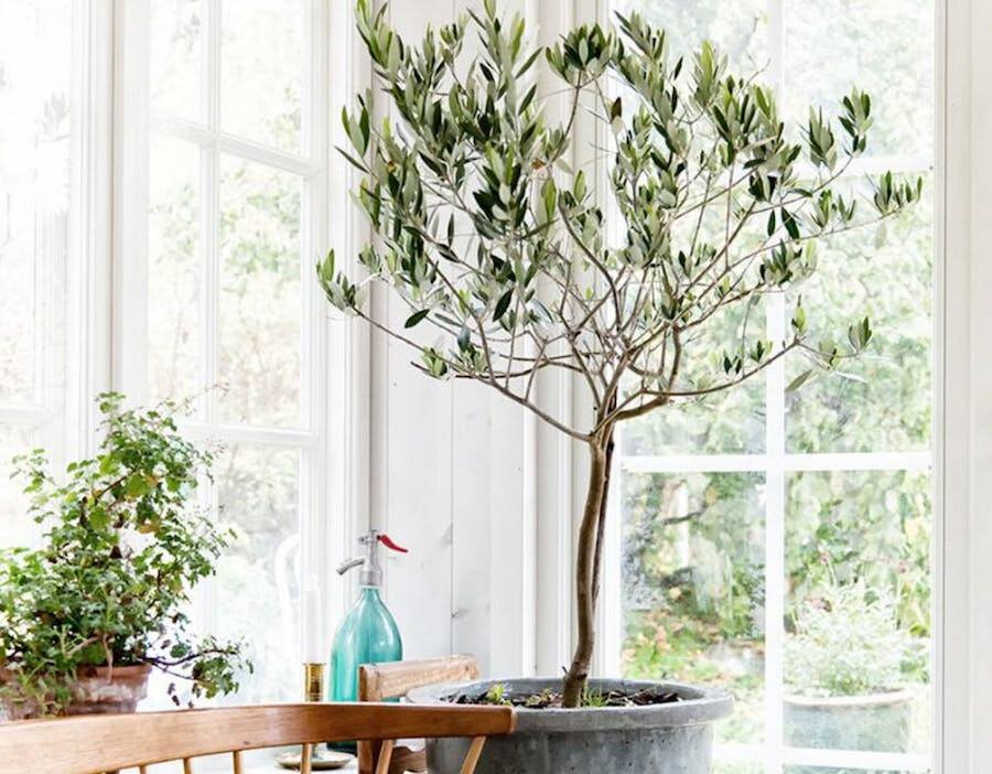 Biophilia And My Top 5 Easy To Care For Houseplants Catherine Yuen Interior Designer In Vancouver Bc
