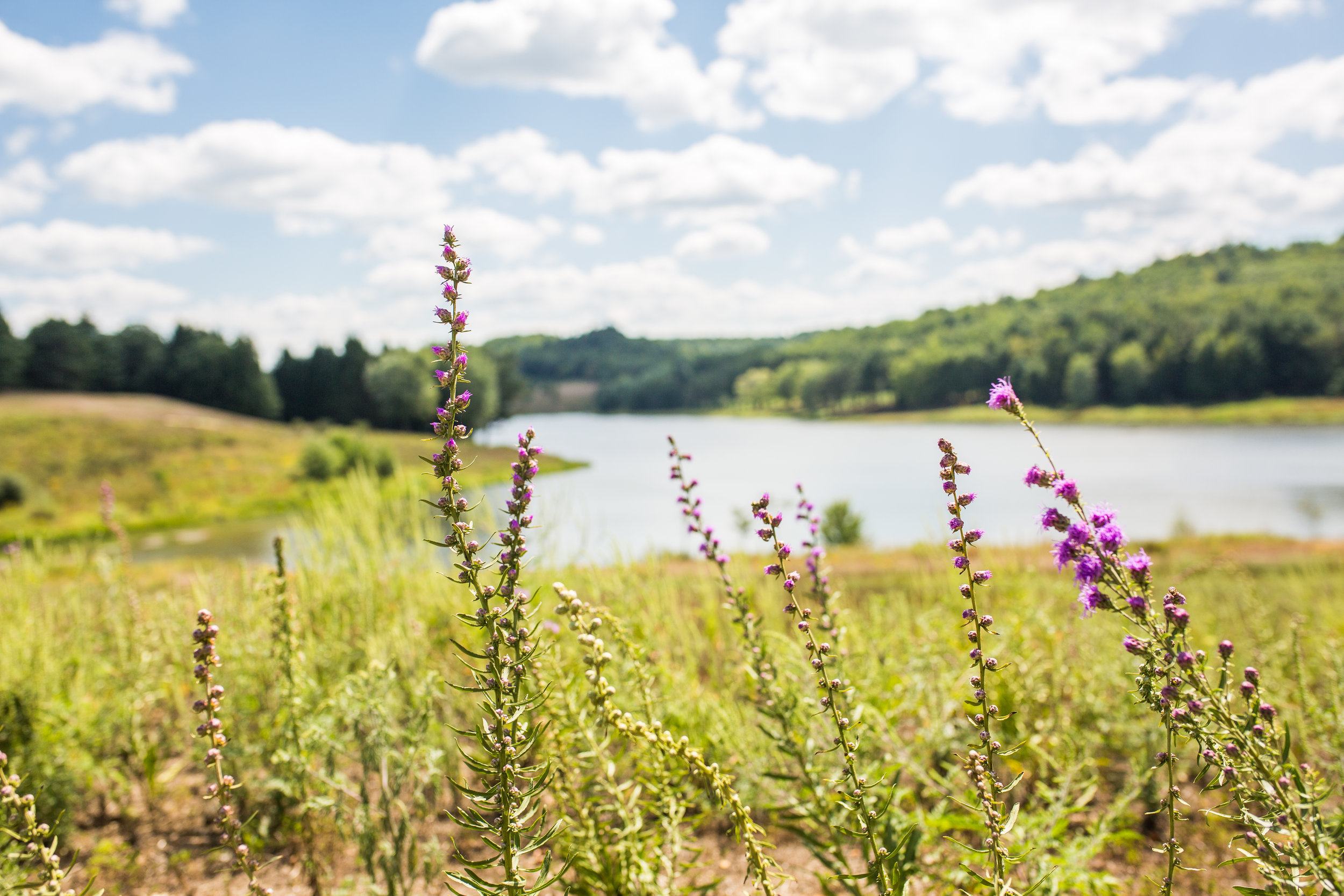 Restoring our Lands -