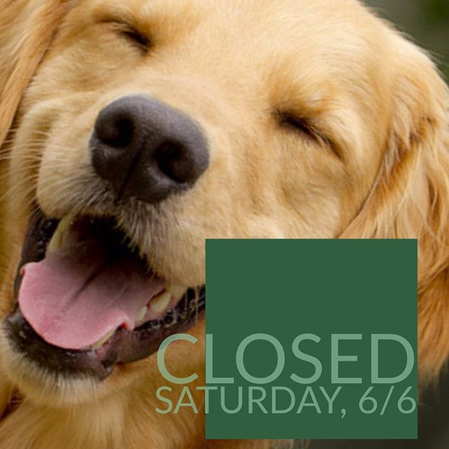 THIS SATURDAY, 6/6, we will not be open for normal services because we are having a Pet Adoption Event with the Kalamazoo SPCA! . From 11-2 at URBAN, you can meet some sweet, furry faces and even take one home! . Click the link in our bio for more info and a gallery of adoptable pets!