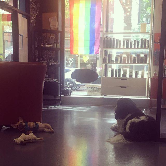 Dog days of summer. #shopdogs #urbanmodernhair #prideweek #frenchiesofinstagram #wutang4life #newfypoo
