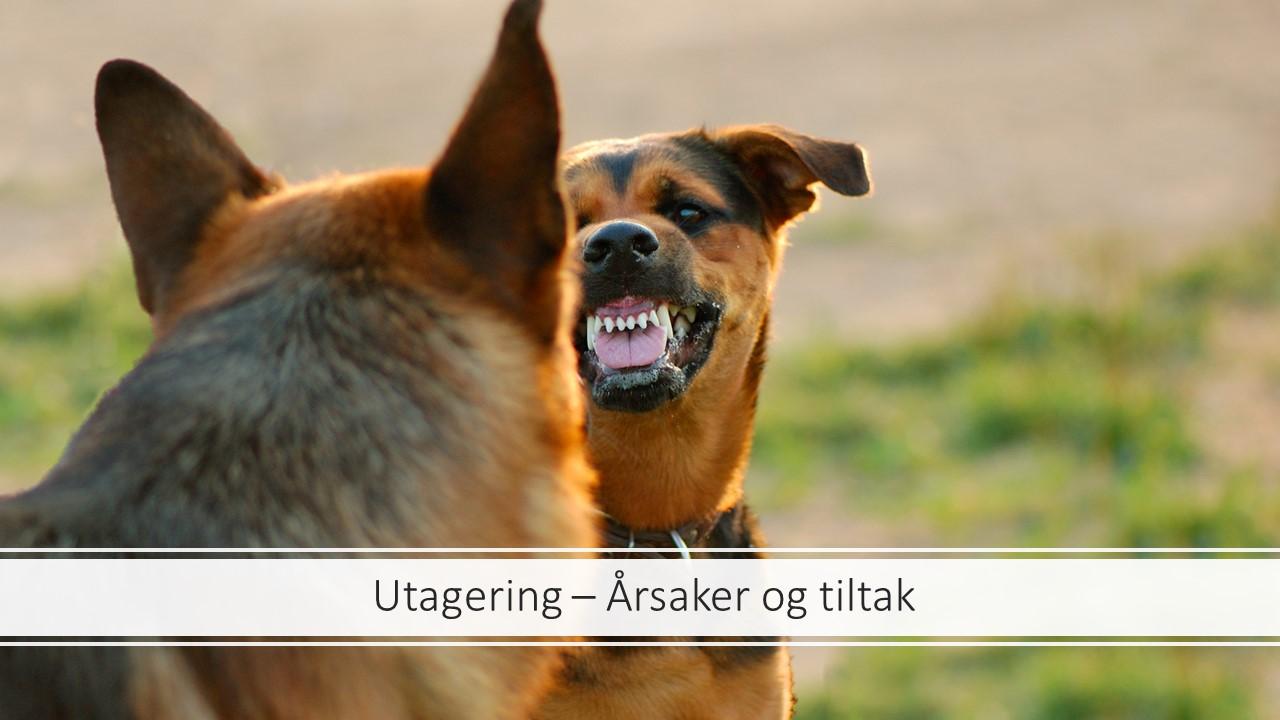 Webinar - Utagering - Bilde.jpg