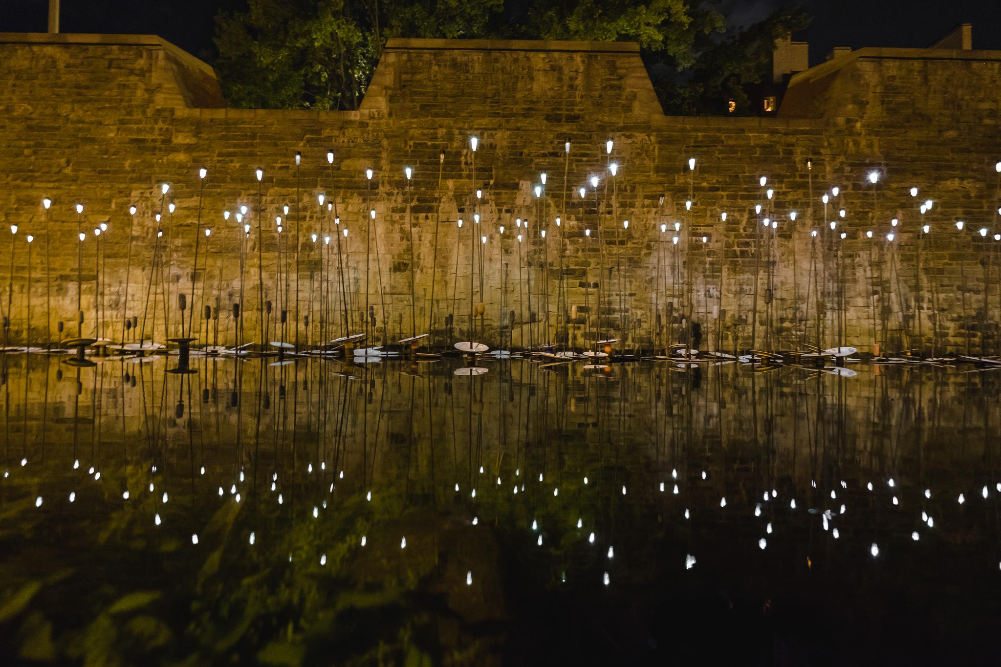 vigjy_water flowers night_cr_Stephane_Bourgeois.jpg