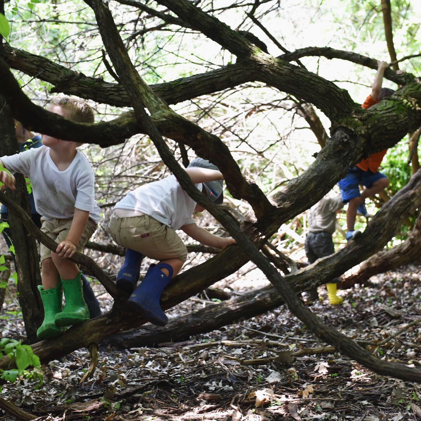 4. Climb that tree. - Pro tip: while it's not OK to climb trees at conservation areas like the Arboretum or Dane County Parks, Madison Parks would love for you to get in there and even put up a slack line or hammock. Just make sure you check out their guidelines first.