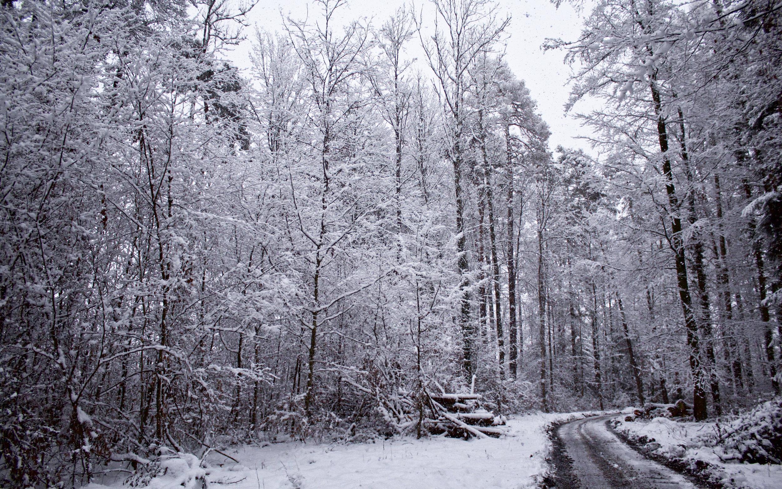 8x5 snowy forest.jpg